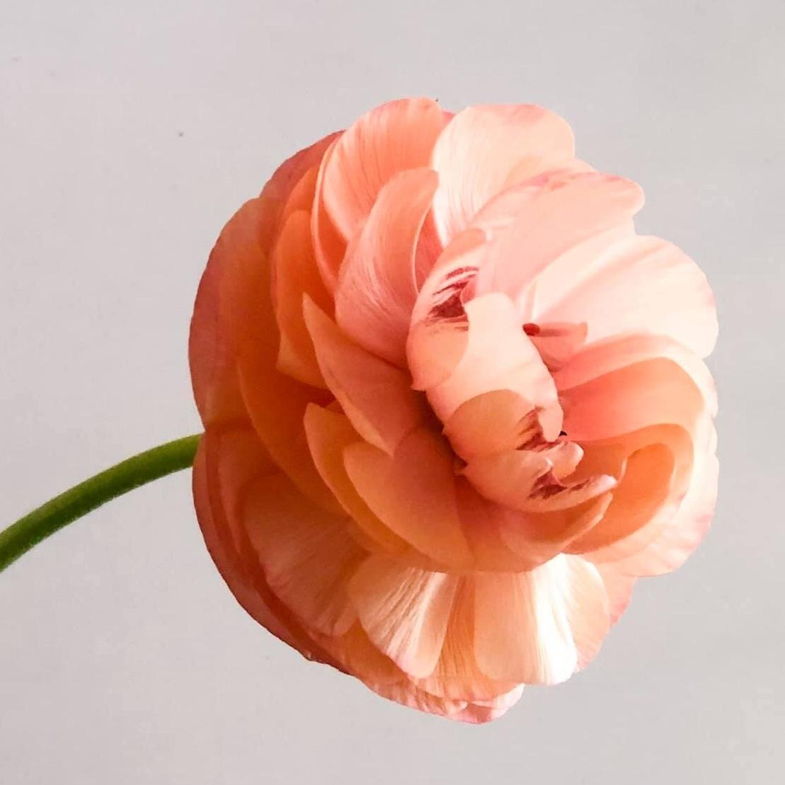 De La Fleur Designs