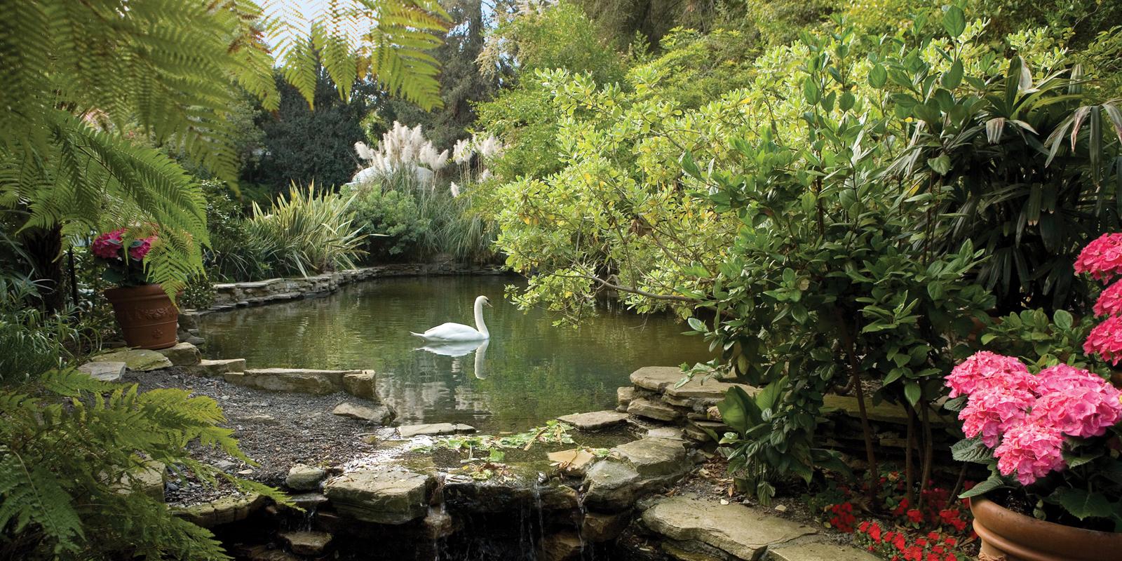 Swan Lake - Hotel Bel-Air