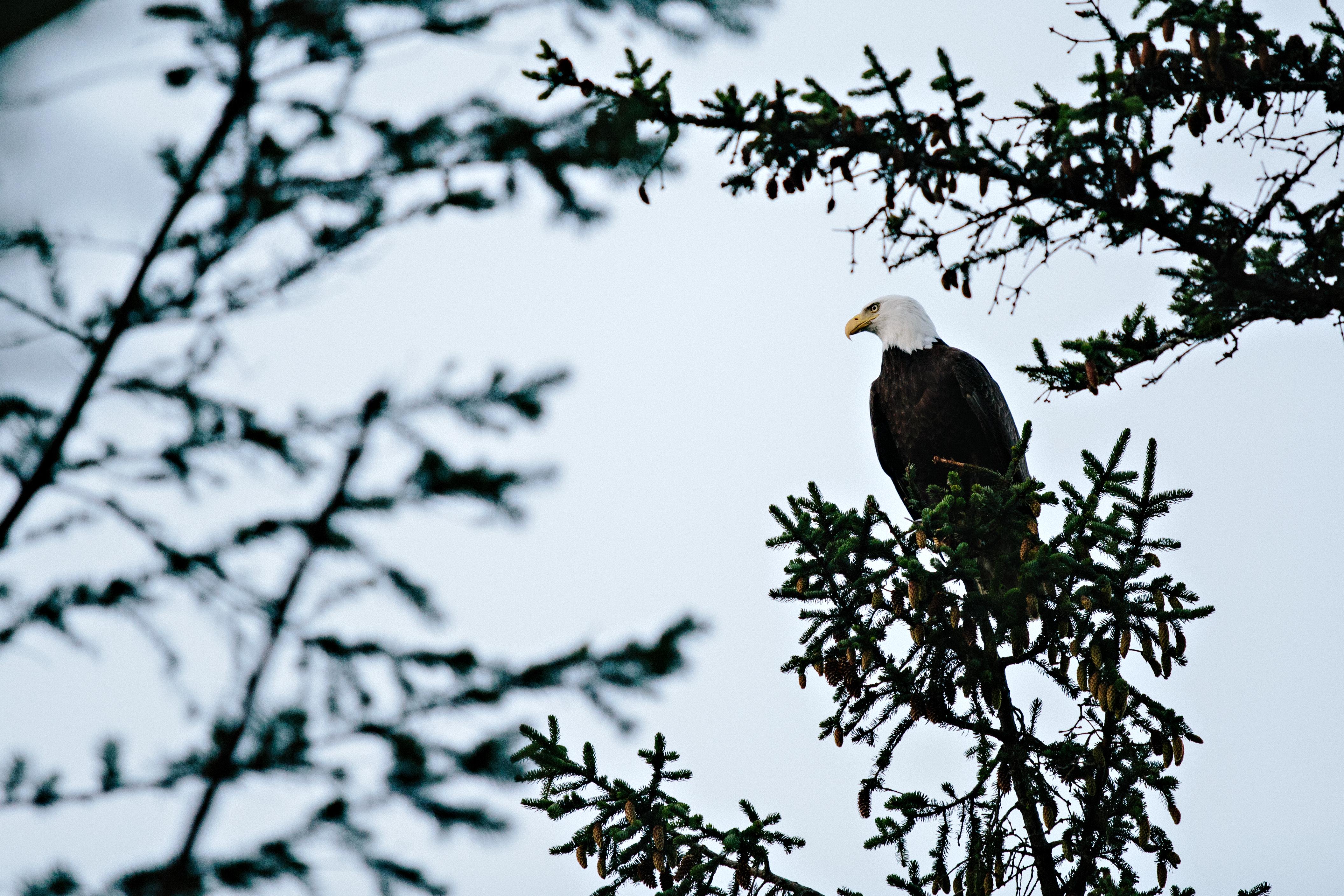 Eagle's Nest Birthday - Good Gracious! Events