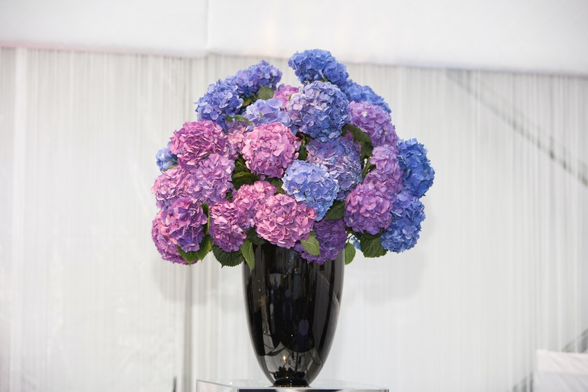 Purple hydrangea's filled stunning black vases that served as bar and food station floral.