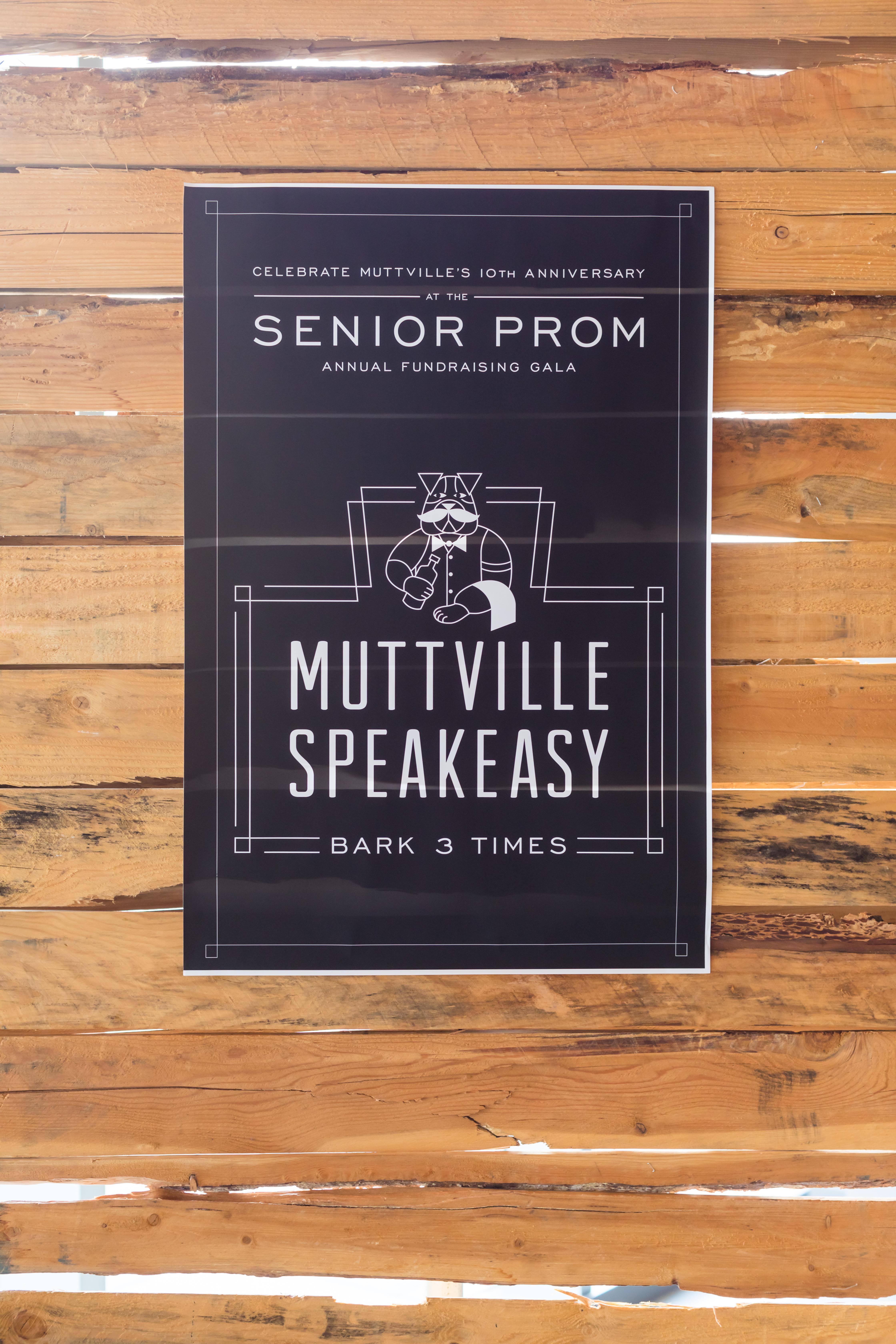 Muttville Speakeasy Senior Prom - All Set
