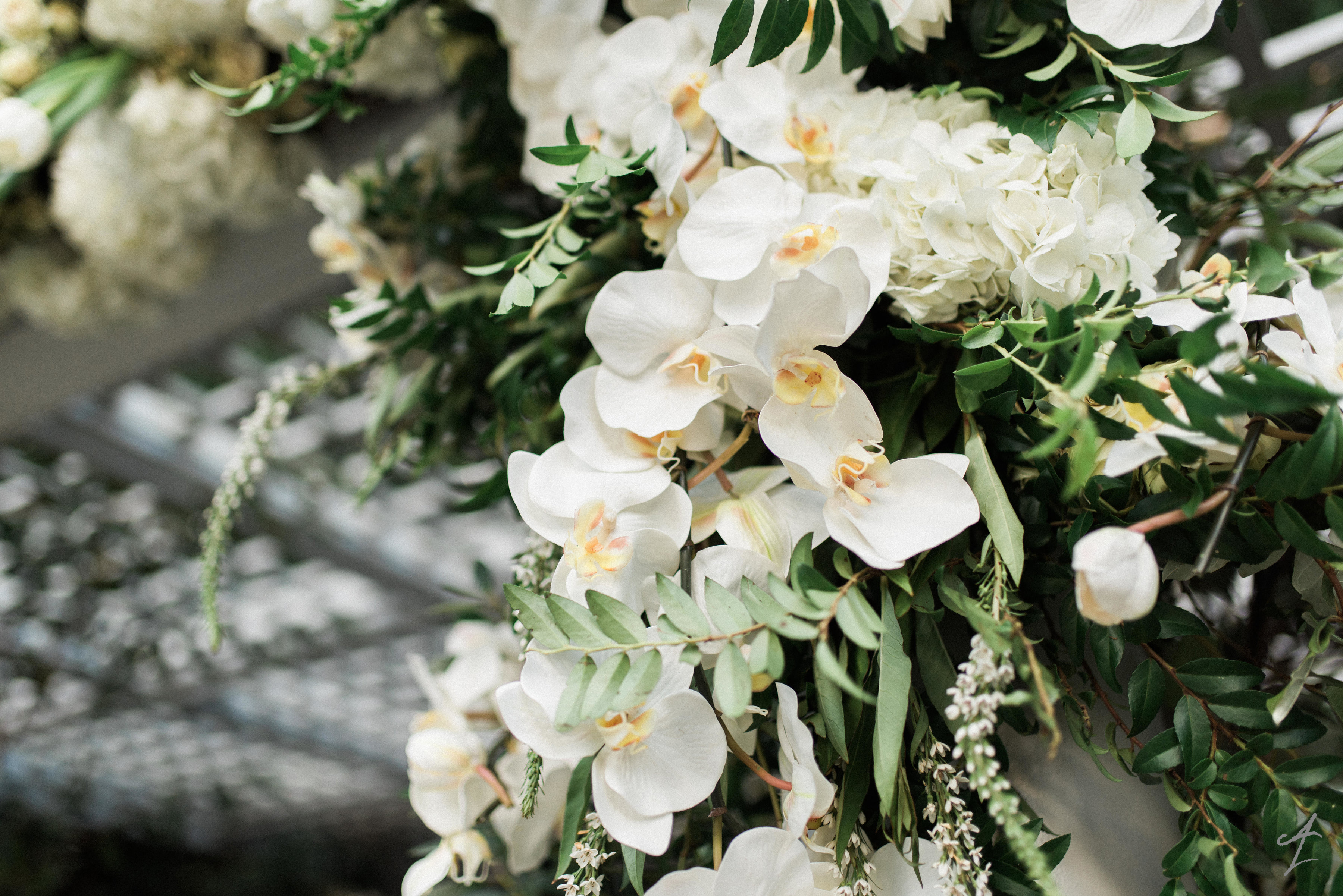 Botanical Beauty - Adam Leffel Productions