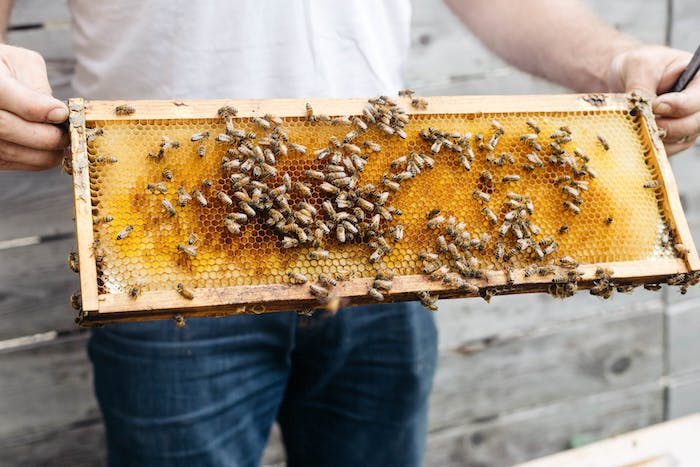 a man in a white t-shirt holds a robbing screen full of bees and honey.