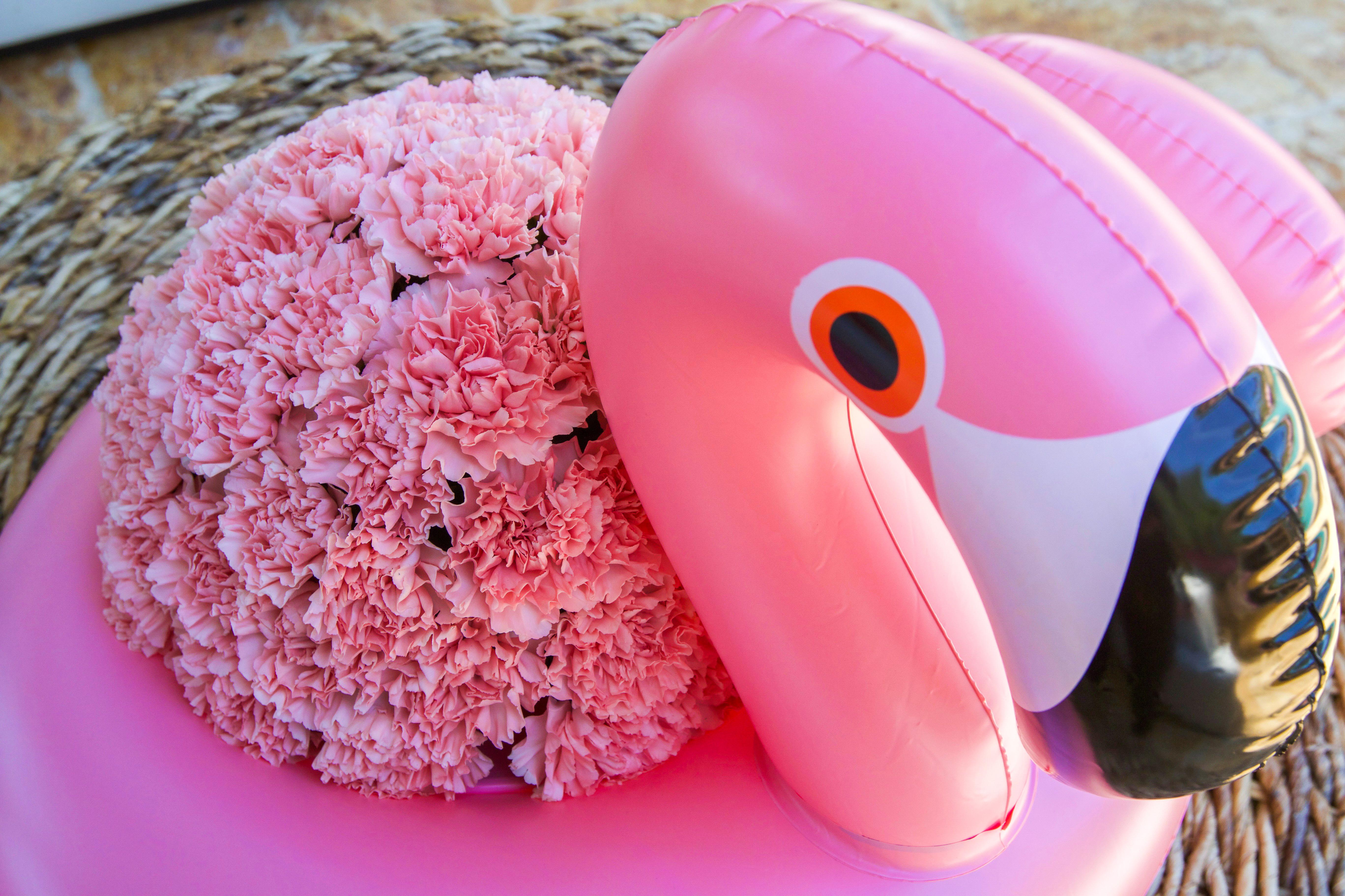 Let's Flamingle! - Design Plan Play