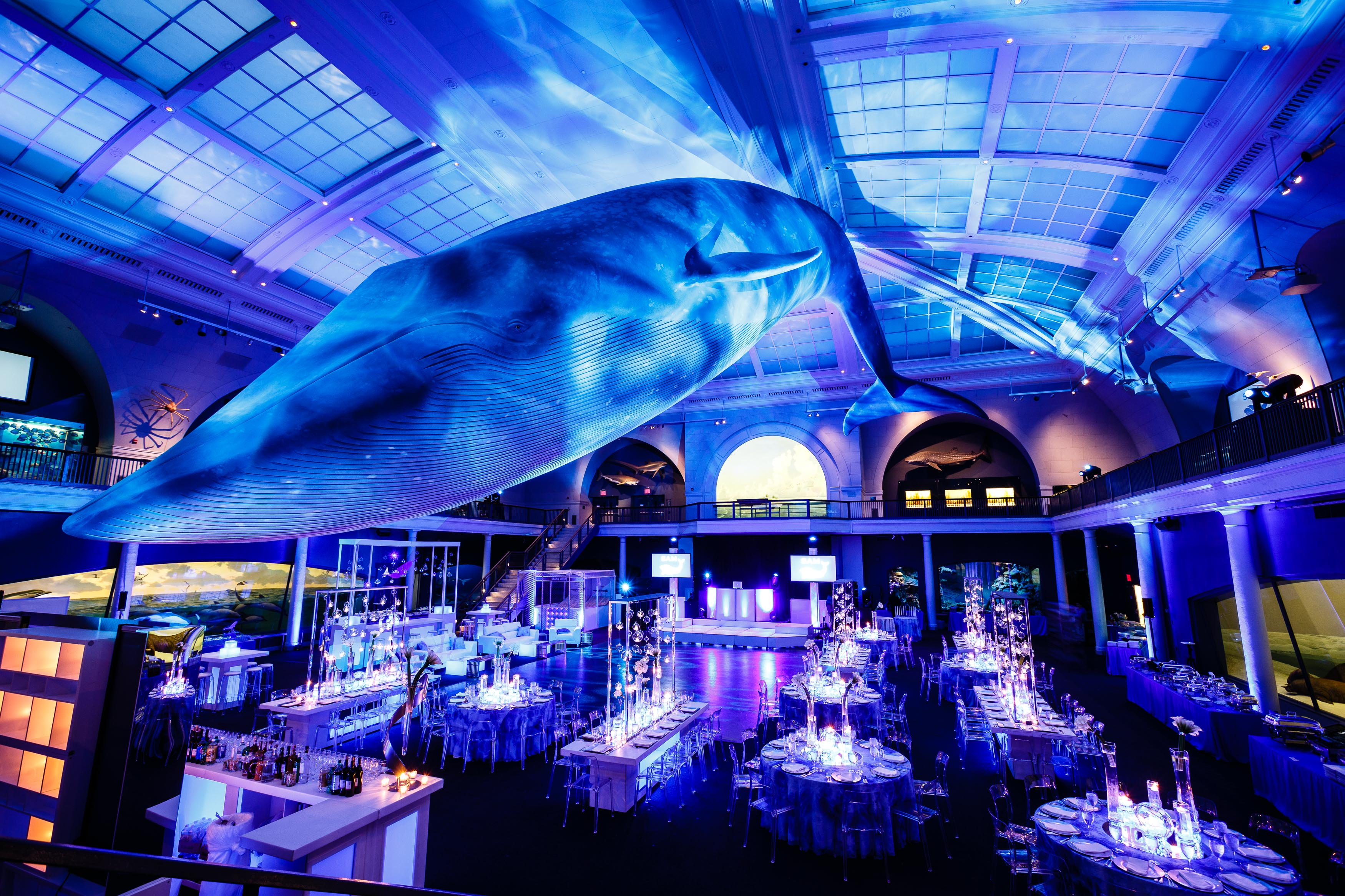 A Whale of a Time at Mitzvah The Museum of Natural History - Amy Katz Events