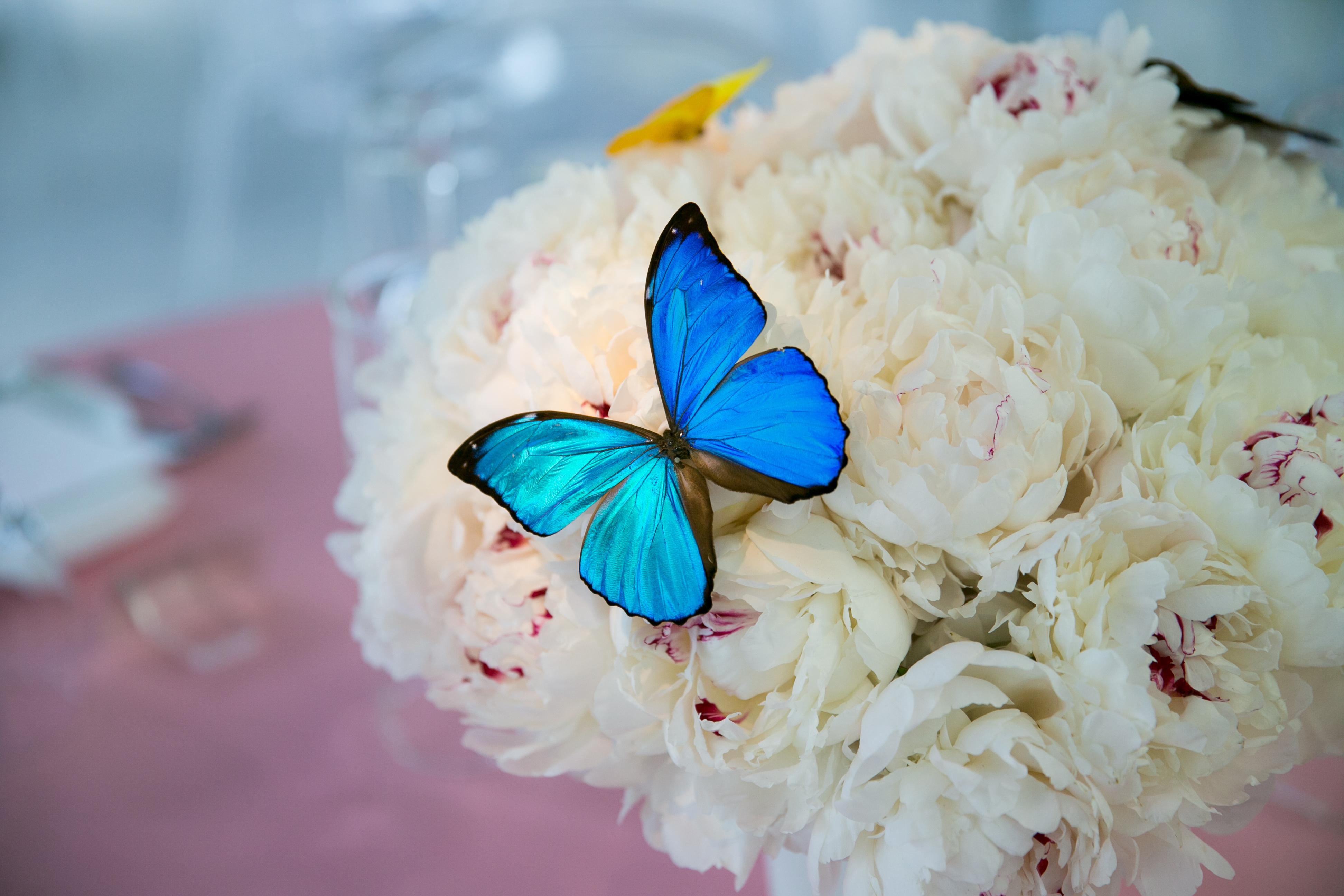 Eden's Butterfly Bat Mitzvah - Craig Paulson Studio